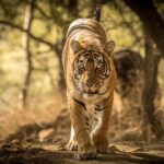 Tigers of India